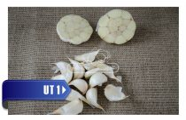 THERMIDROME 30mm+ őszi UT1 fokhagyma vetőmag - átmérő: 30 mm+
